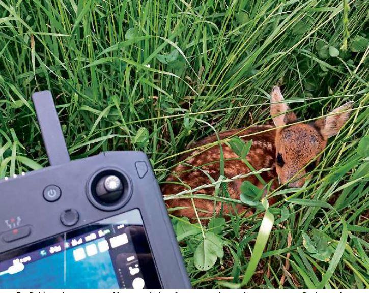 Rehkitzrettung im Linthgebiet mit Drohne